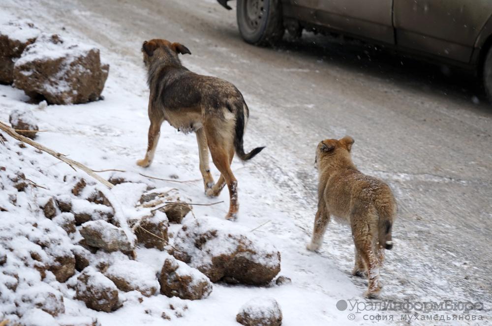 ВЕкатеринбурге отыскали кладбище бродячих собак Сегодня в10:49