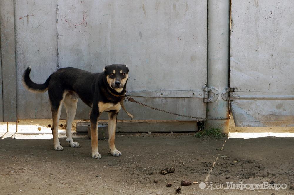 ВЛабытнанги надетей нападают домашние собаки