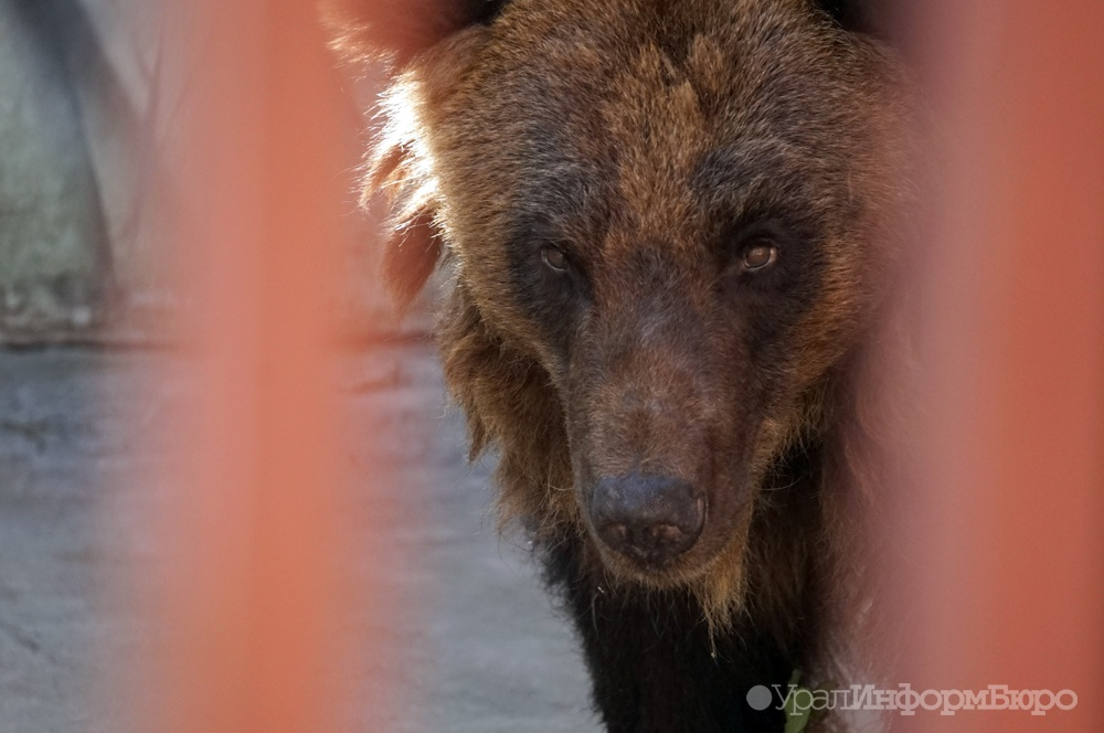 ВЕкатеринбургском зоопарке уже проснулись медведи