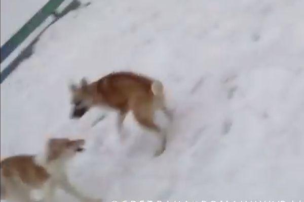 ВРевде женщина спасла ребенка отсворы бездомных собак
