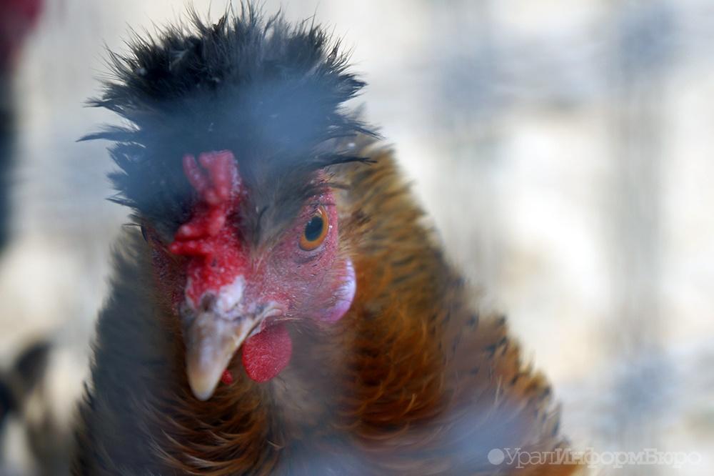 Среднеуральскую птицефабрику выставили наторги за810 млн Сегодня в10:42