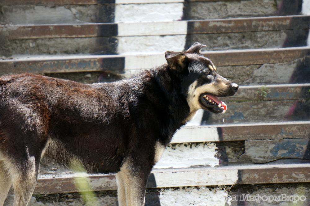 Хозяин собак, насмерть загрызших 7-летнего ребенка, предстанет перед судом