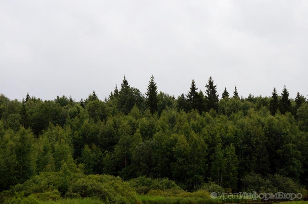 ВПермском крае втайге потерялся мужчина с сыном