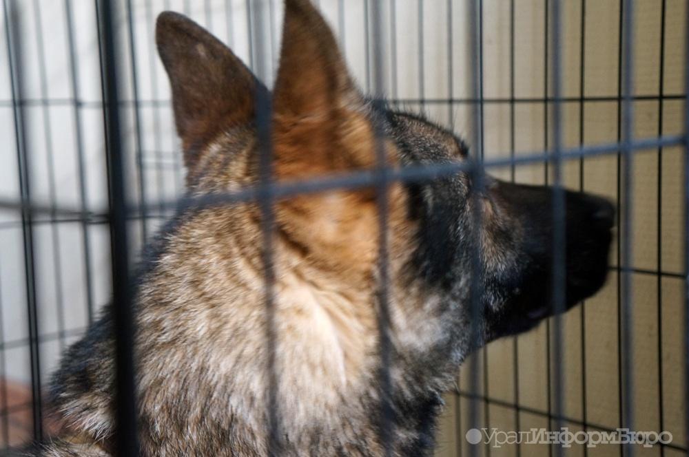 НаСреднем Урале судят собственников собак, загрызших семилетнюю девочку