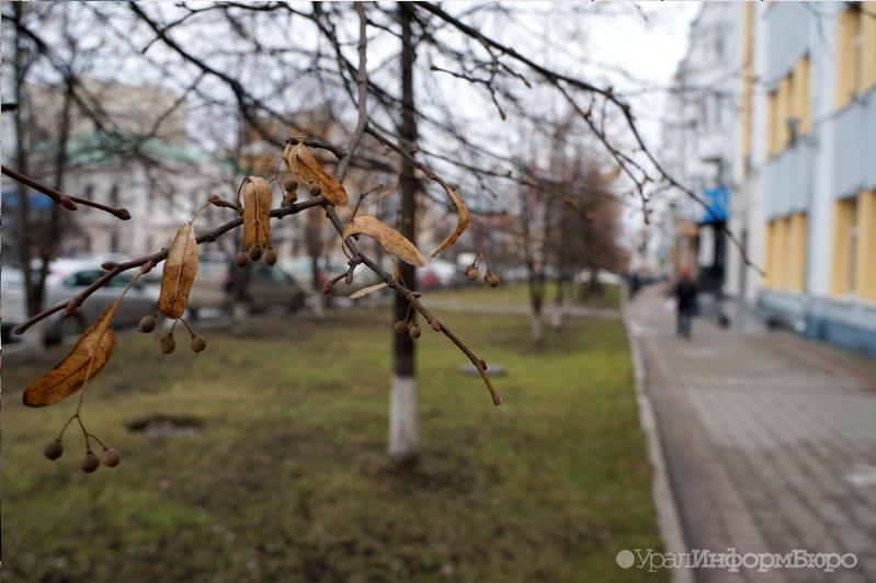 Уральские синоптики: такой тёплый ноябрь последний раз был в2005-м