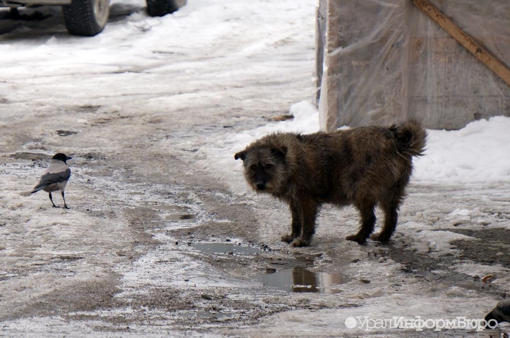 На Южном Урале объявили карантин по бешенству