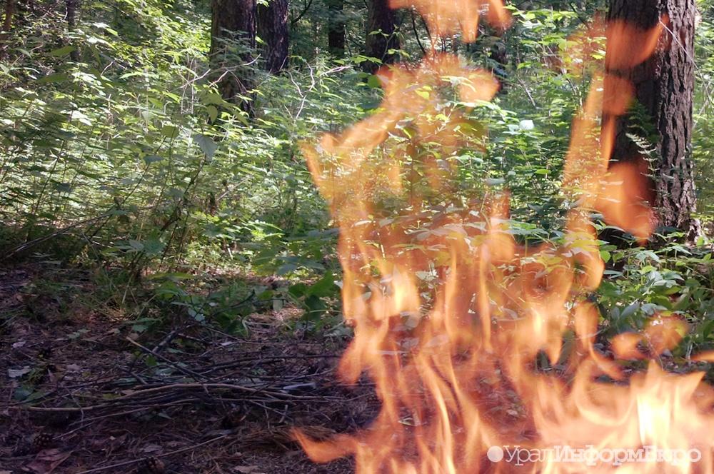 Ребенок сжег леса на15 млн. руб.