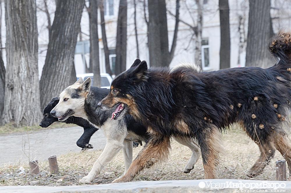 можно картинки собак свора окон пансионата