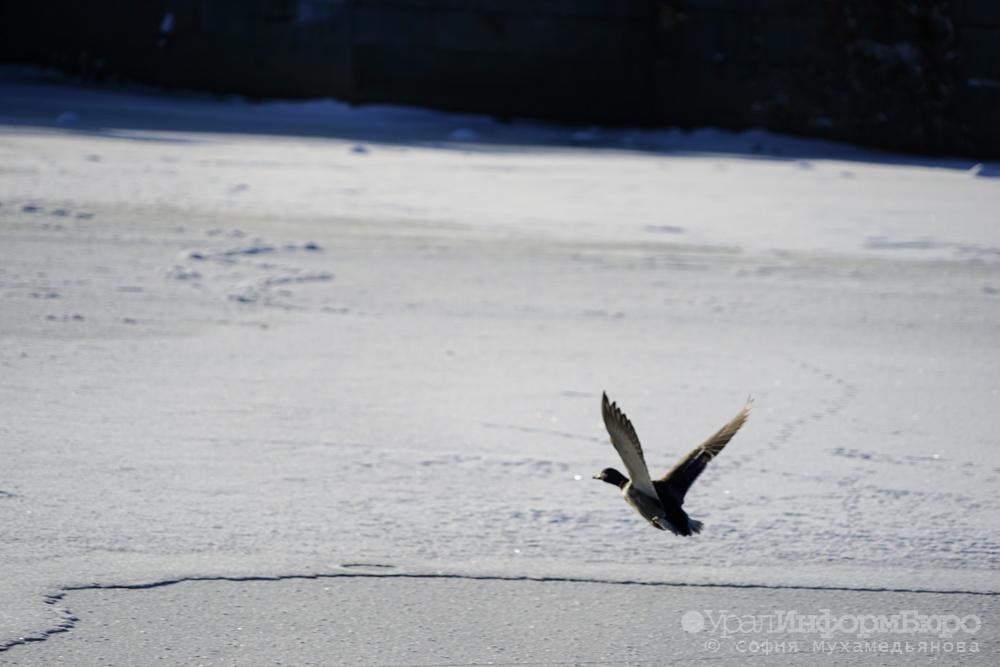 Северный циклон заморозит свердловчан Сегодня в10:55