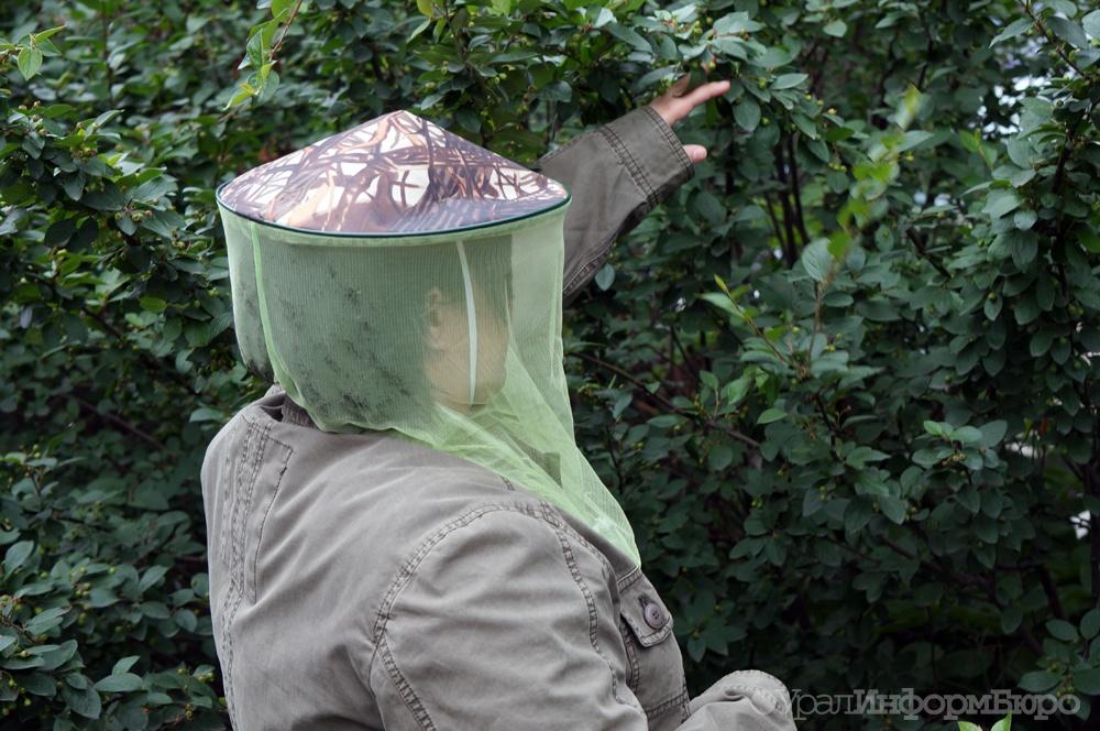 НаКанарах появились комары-переносчики лихорадок Денге иЗика