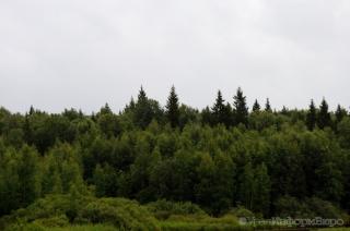 В Прикамье нашли плутавших 2 дня в лесу отца с сыном